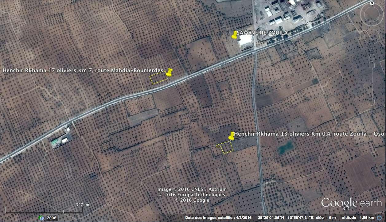 Vend oliviers henchir rkhama km 7 route mahdia - boumerdes