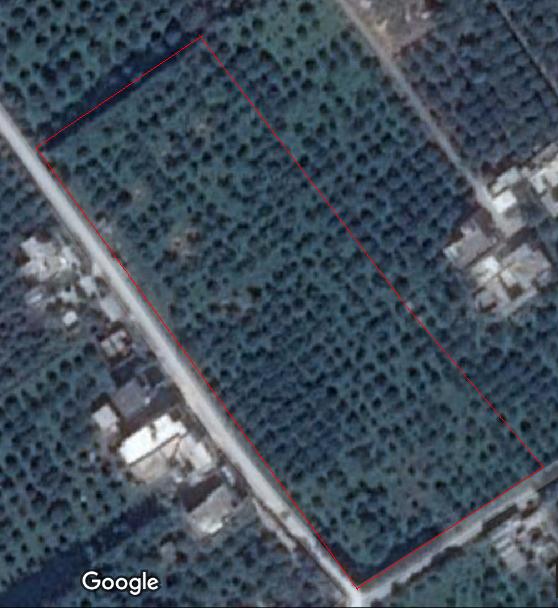 AV verger d'agrumes TF Coopérative de 1H65A95C planté sis à Zaouiet Jedidi, Beni Khalled.