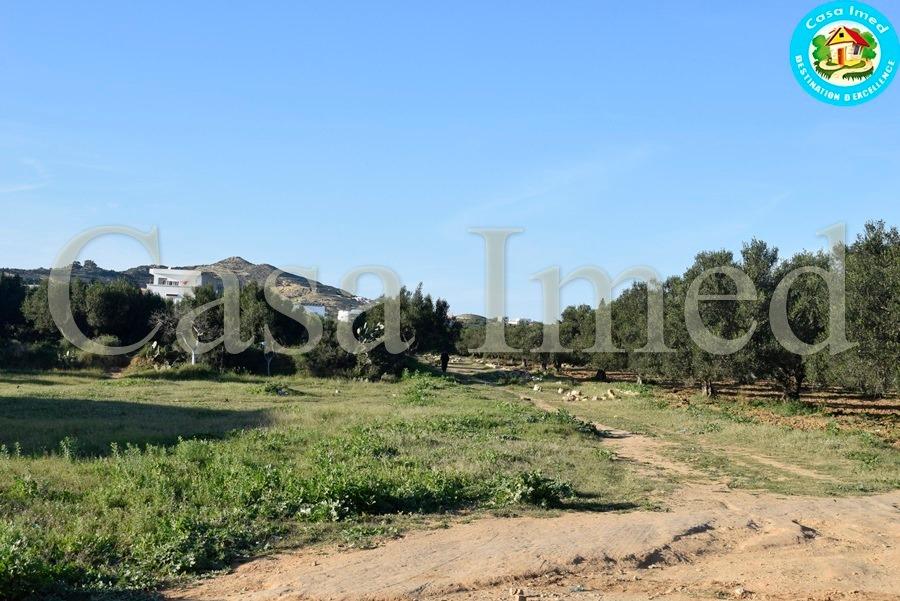 Un superbe terrain dans un emplacement stratégique avec un bon voisinage à mrezga hammamet nord