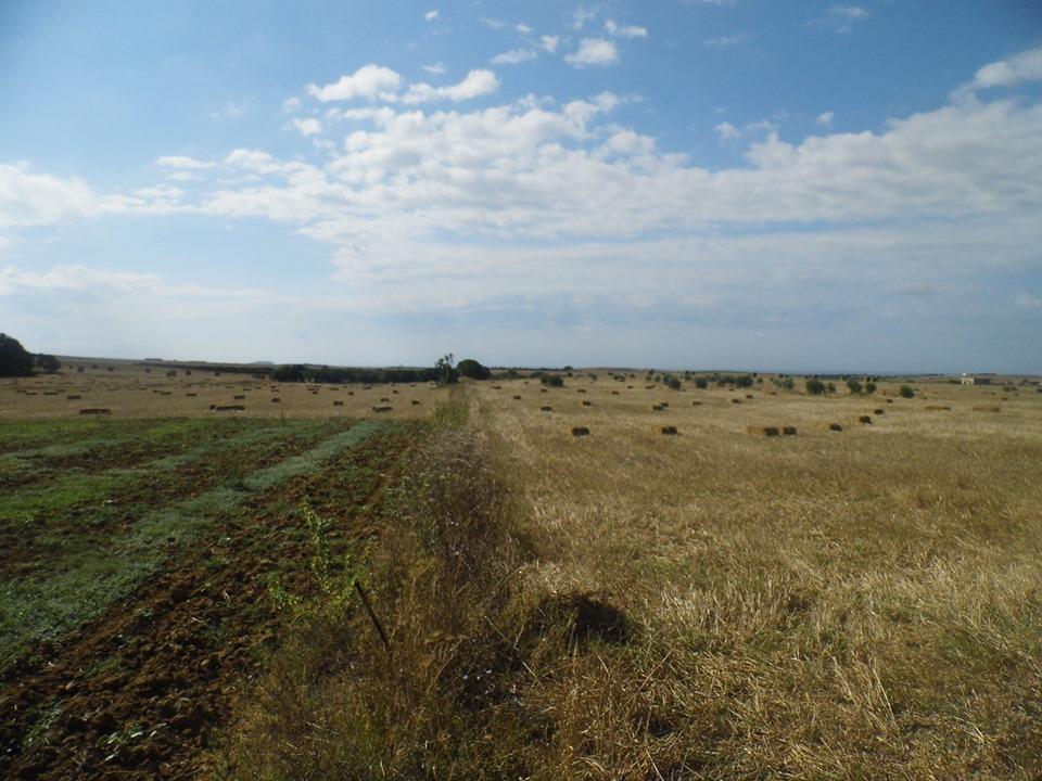 Terrain en pleine nature a manzel ibrahim