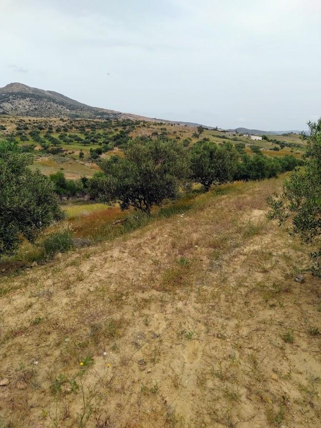 Senia à vendre : occasion en or et à ne pas rater 3,5 hectares à 70 milles d